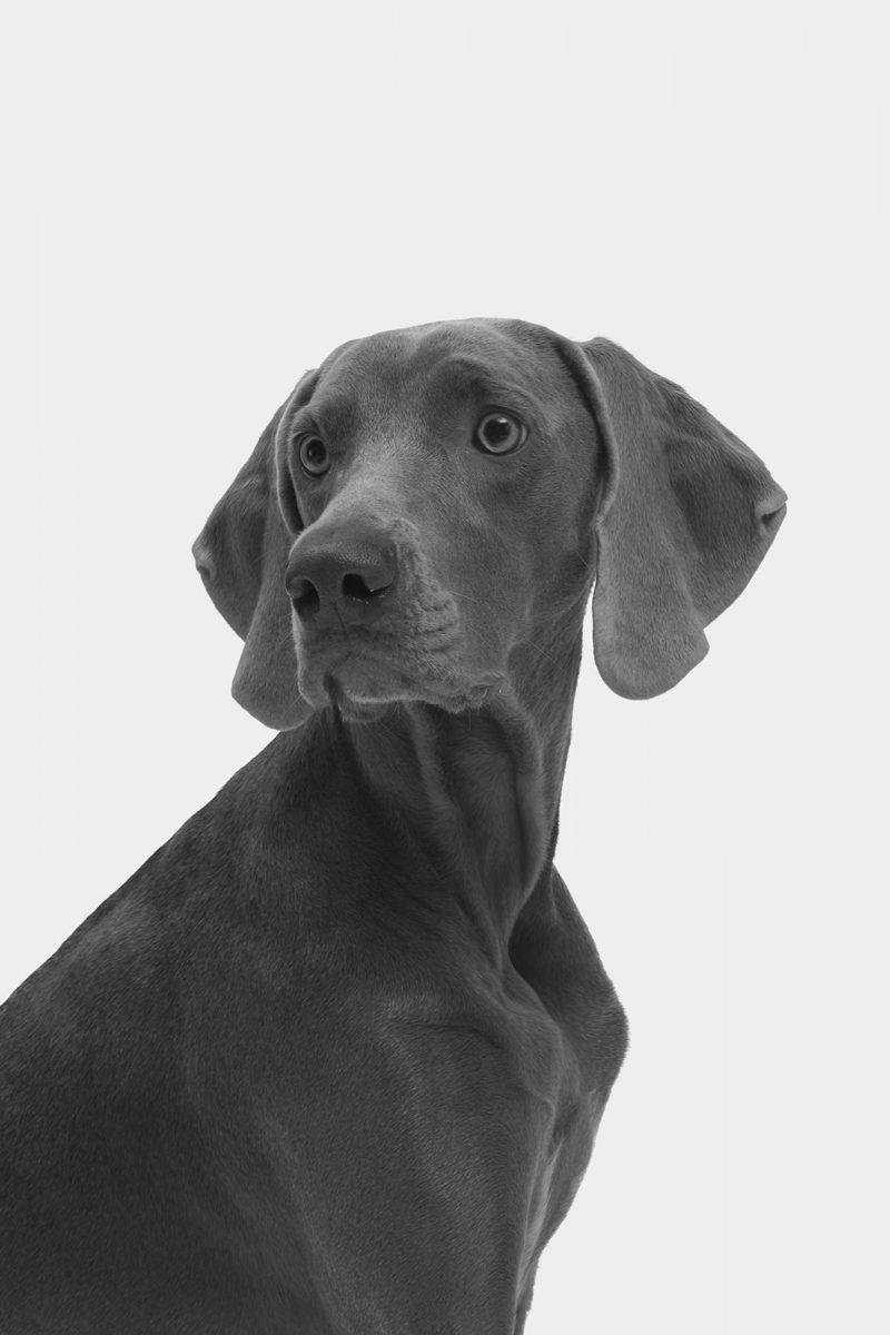 Hund, 2013